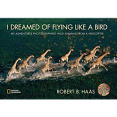 I Dreamed of Flying Like a Bird, 2010