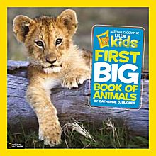 Animal Big Books for Kids