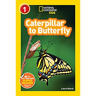 National Geographic Caterpillar To Butterfly