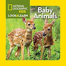 Kids Look and Learn: Baby Animals