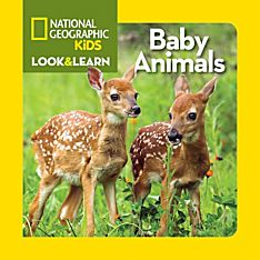 Animal Books for Toddlers