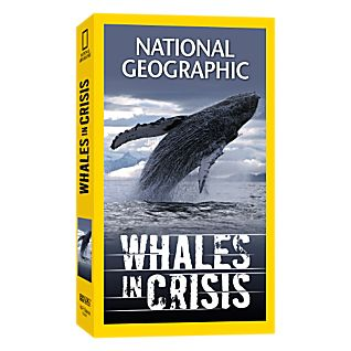 Whales in Crisis Video