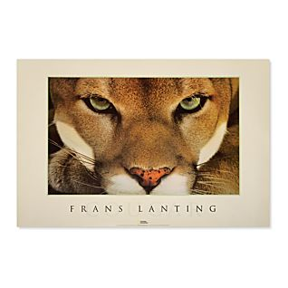 National Geographic Cougar Poster