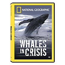 Whales in Crisis DVD, 2006