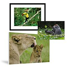 Animal Prints & Posters on National Geographic Art Store