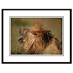Big Cats Photographic Prints