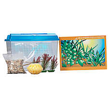 All Living Things® Hermit Crab Starter Kit
