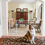 Carlson Pet Products Maxi Extra Tall Walk-Thru Pet Gate