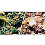 Marina® Reversible Marine Reef & Coral Aquarium Background
