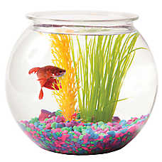 Grreat Choice® 1 Gallon Fish Bowl