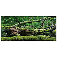 All Living Things® Forest Terrarium Cling Reptile Background