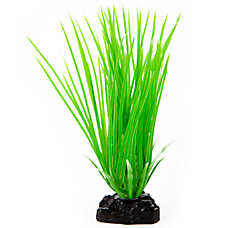 Top Fin® Hair Grass Aquairum Plant