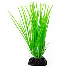 Top Fin® Hair Grass Aquairum Plant