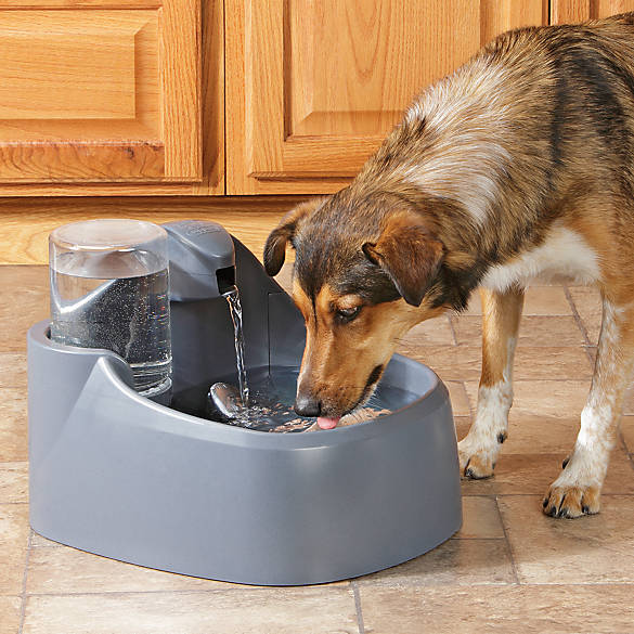 Top paw dog water fountain dog automatic feeders petsmart for Automatic fish feeder petsmart