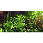 Top Fin® Tropical Greenery Aquarium Cling
