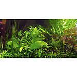 Top Fin® Tropical Greenery Aquarium Cling