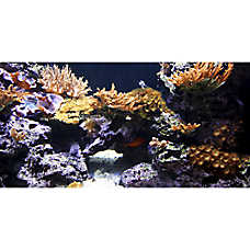 Top Fin® Coral Aquarium Cling