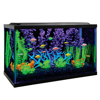 Get your glow on with an eye-catching GloFish® tanks!