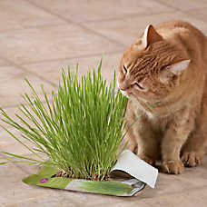 Whisker City® Cat Grass