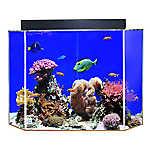 Clear-For-Life 50 Gallon Pentagon Aquarium