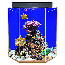 Clear-For-Life 55 Gallon Hexagon Aquarium