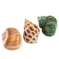 All Living Things® Decorative Hermit Crab Shell