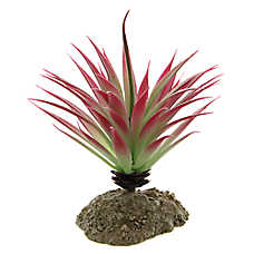 All Living Things® Sisel Reptile Plant