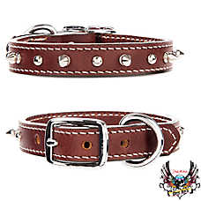 Bret Michaels Pets Rock™ Single Spiked Dog Collar