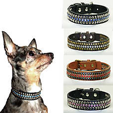 Hip Doggie Winston Dog Collar