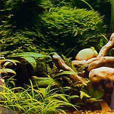 Top Fin® Tropical & Riverbed Aquarium Background