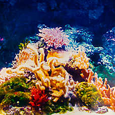 Top Fin® Coral & Seagrass Aquarium Background
