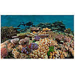 National Geographic™ 3-D Lenticular Coral Aquarium Background