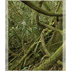 National Geographic™ 3-D Rainforest Vertical Aquarium Background