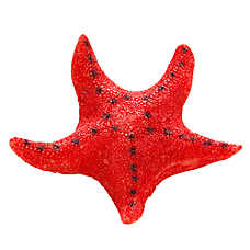 National Geographic™ Starfish Aquarium Ornament
