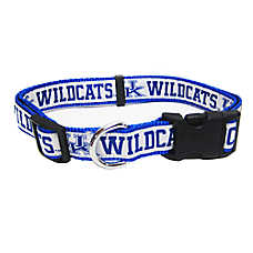 University of Kentucky Wildcat NCAA Collar