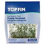 Top Fin® Limnophila Heterophylla