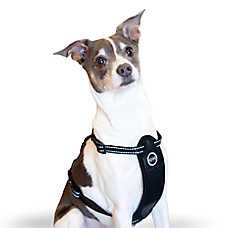 K&H Travel Safety Pet Harness