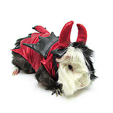 All Living Things® Pet Halloween Devil Small Pet Costume
