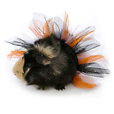 All Living Things® Pet Halloween Tutu Small Pet Costume