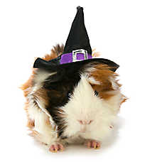 All Living Things® Pet Halloween Witch Hat Small Pet Costume