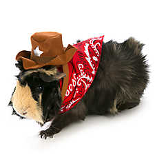 All Living Things® Pet Halloween Cowboy Small Pet Costume
