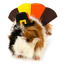 All Living Things® Pet Halloween Turkey Small Pet Costume