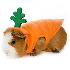 All Living Things® Small Pet Carrot