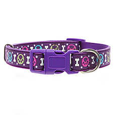 Top Paw® Paw Dot Dog Collar