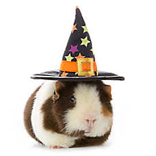 Thrills & Chills™ Pet Halloween Witch Hat