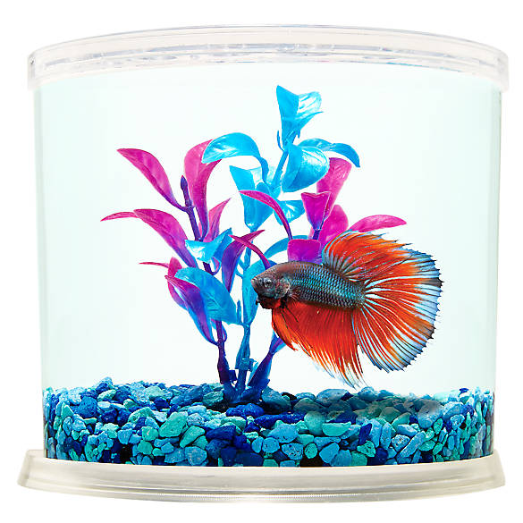 Top fin betta connection betta tank fish aquariums for Betta fish tanks petsmart