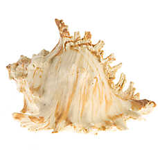 Top Fin® Seaside Seashell Aquarium Ornament