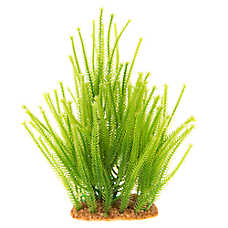 Top Fin® Green Landscape Aquarium Plant