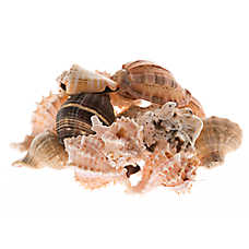 ZOO MED™ Mixed Fancy Hermit Crab Shells