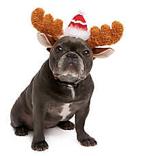 Pet Holiday™ Antler Dog Headband